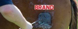 Momen Tidak Menyenangkan Ketika Nama Brand Bisnis Kita Sudah Didaftarkan Orang Lain.